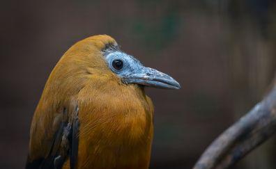Orange, long beak, bird
