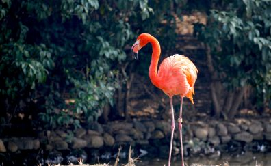 Flamingo, pink bird, big bird, stand