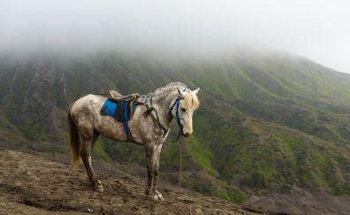 Mountains, horse animals, landscape