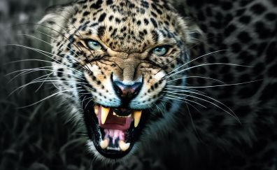 Angry leopard muzzle, wild animal