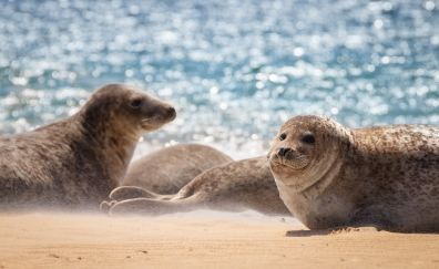 Seal, water animals, play, beach