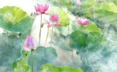 Pond, lotus, flowers, leaves