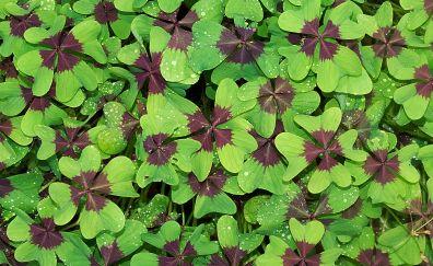Green & brown leaves, water drops
