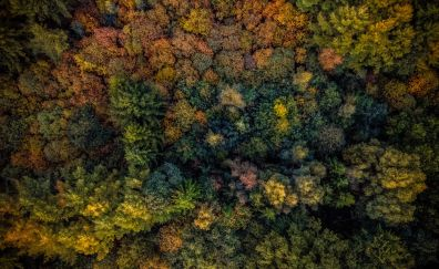Autumn, trees, forest, aerial view, 4k
