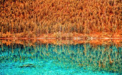 Lake, trees, reflections, nature