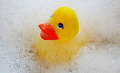 Foam, rubber duck, swim, duck, toy