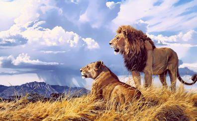 Lions, beast, animal, pair, 4k