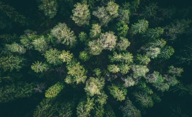 Forest, green trees, aerial view