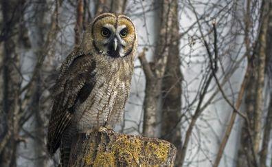 Owl, predator, bird, 4k