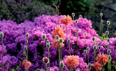Flowers, spring, garden, 4k