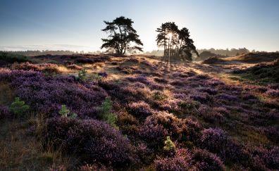 Landscape, plants, dawn, lavender