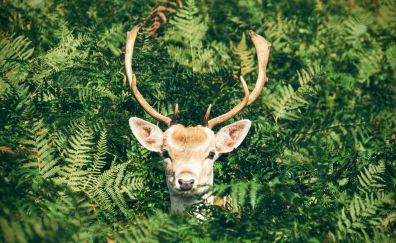 Deer muzzle, leaves, tree branches