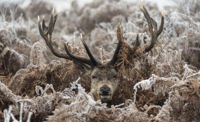 Deer muzzle, fall
