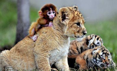 Baby animals, lion, monkey, tiger