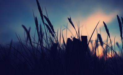 November field blue sunset