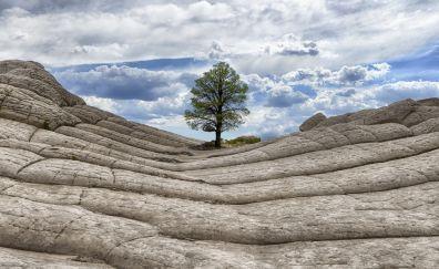Tree rock landscape