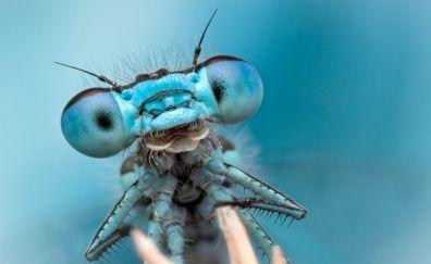 Dragonfly, insect, muzzle, eyes, macro