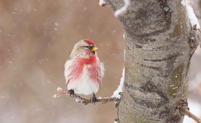 Winter, snow, bird, sitting, tree trunk