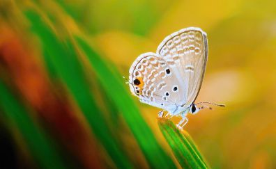 Close up, insect, butterfly, wings, 4k
