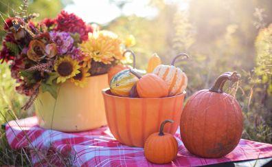 Fruits basket, pumpkin, vegetables, 5k