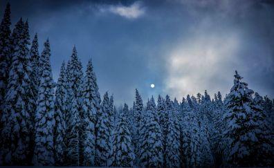 Winter, sky, night, trees, nature, 5k