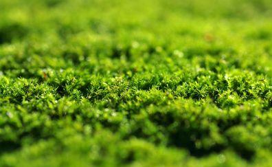 Green grass, moss, close up, 5k