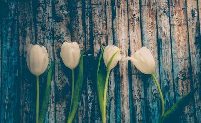 White tulips, wooden board