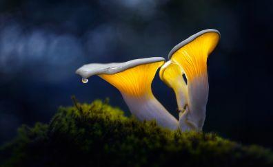 Mushroom, water drop, moss