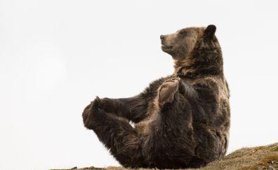 Bear, predator, wild animal