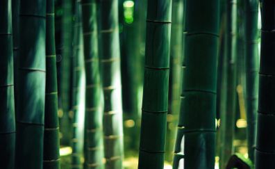 Bamboo wood forest