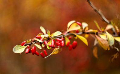 Briar autumn branch