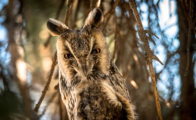 Owl bird, night bird