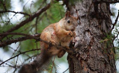 Squirrel, chipmunk, sitting on tree branch