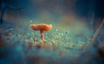 Mushroom, moss, close up, small grass