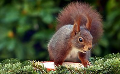 Squirrel, play, cute rodent, close up
