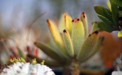 Succulent, cactus, plants