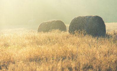 Haystack in farm, summer