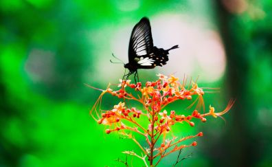 Black, butterfly, insect, sit, blur