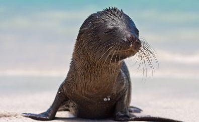 Cute, baby animal, seal, fur, muzzle