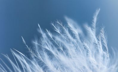 White feathers, 4k, close up