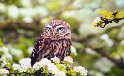 Cute, blossom, predator, owl, bird