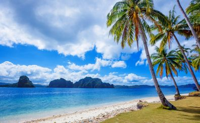 Tropical beach, palm tree, summer