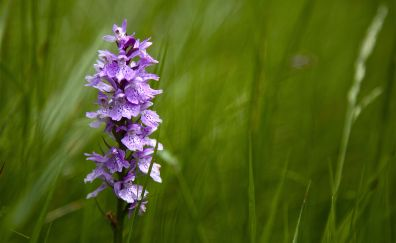 Grass threads, purple flowers, wild flowers