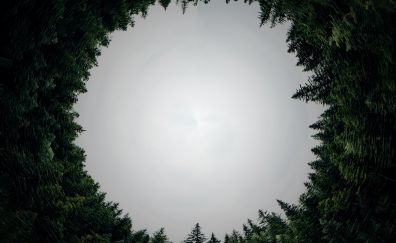 Circle, forest, trees