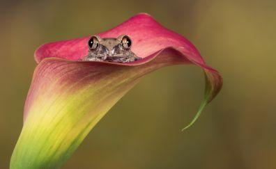 Frog, amphibian, flowers, animal