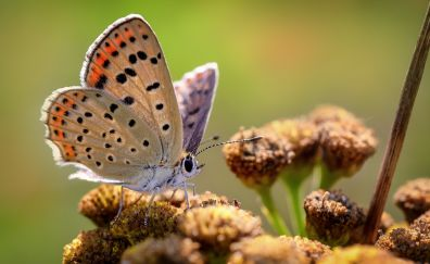 Insect, close up, butterfly