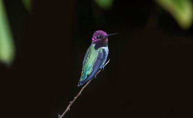 Hummingbird, bird, close up, 4k