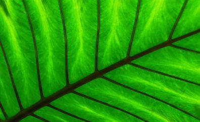 Green leaf, spine, veins, close up
