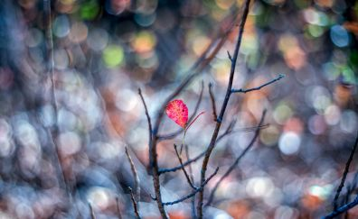 Pink leaf on branch of tree blurred