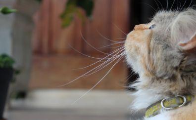 Looking up, cat, head